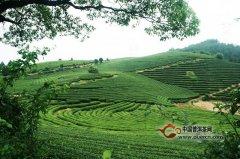 山岩翠绿茶产地在哪里